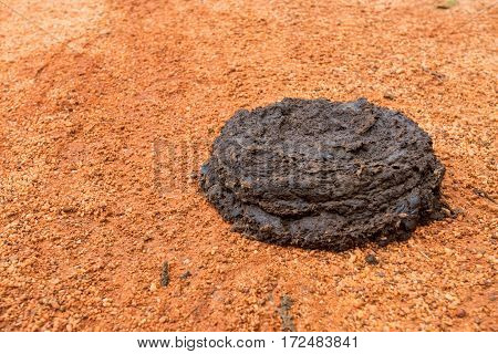 Close up of fresh cow manure on a ground