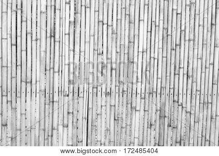 bamboo wall on black and white background,
