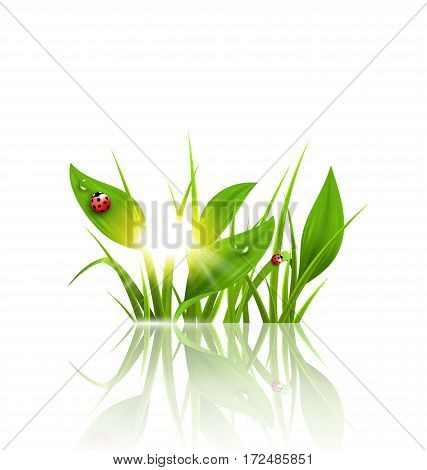 Green grass, plantain and ladybugs with sunrise and reflection on white. Floral nature spring background