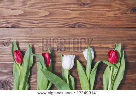 Five tulip flowers (red and white) on wooden background