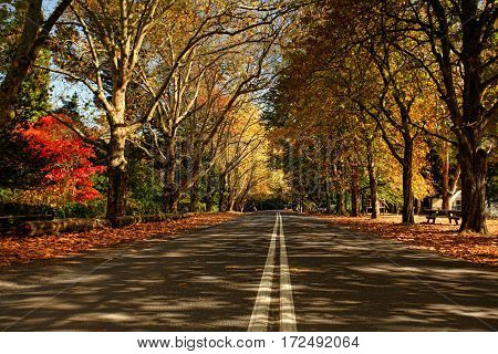 Autumn Trees Along A Street In The Fall Season