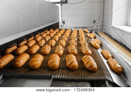 Fresh White Bread From The Oven