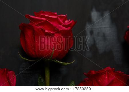 Roses with Gift box and pink ribbon on black board, Valentines background, wedding day. Love Concept. Valentines day Card with red hearts on black background with copyspace for greeting text
