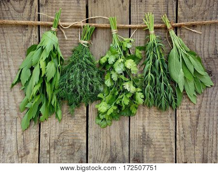 Aromatic Herbs Lovage, Dill, Cilantro, Hyssop, Sage,