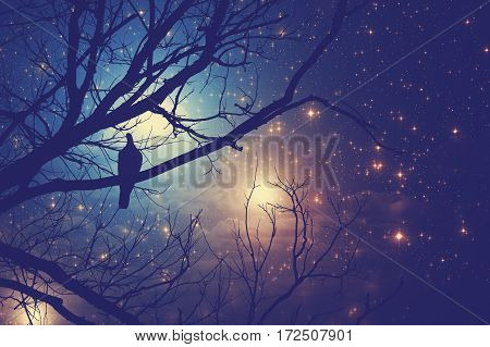 Starry skies with silhouettes of a tree and a bird on it.