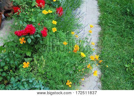 California Poppy And Rose Flower