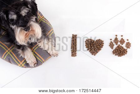 Dog With Granules