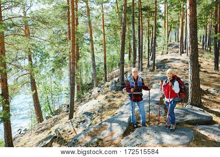 Active travelers with trekking sticks hiking in the forest