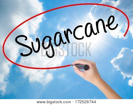 Woman Hand Writing Sugarcane  With Black Marker On Visual Screen.
