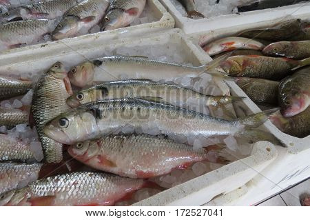 Exotic sea fisf from Adriatic sea. Fish shop in Bar-city, Montenegro.