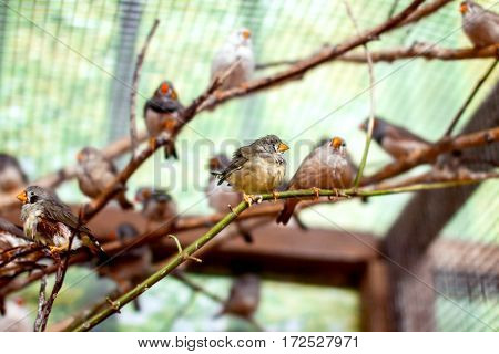 a exotic image of a flock of small birds in the aviary beautiful