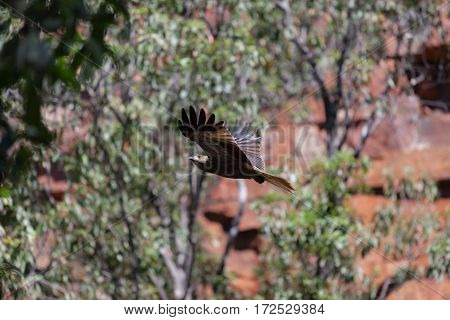 An eagle in flight inside a gorge known as