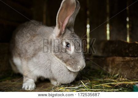 The rabbit in a cage looks in the chamber one eye.