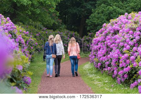 OLDENZAAL NETHERLANDS - MAY 27 2016: Three unknown girls seen from behind in a lane with blooming pink rhododendron flowers