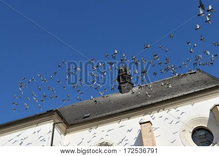 A flock of pigeons flies from the roof of the church.