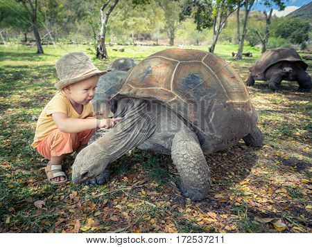 Child touching Aldabra giant tortoise. Mauritius