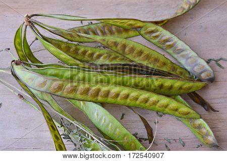 fresh acacia tropical plant on wooden board
