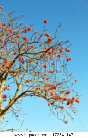 Close Up Of   Flower Plant And Clear Sky