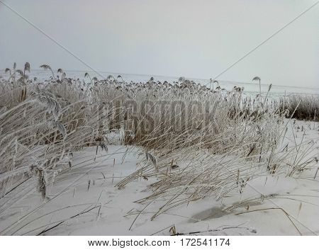 plants in the field covered by frost the specifics of the season winter