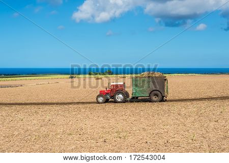Cascavelle Mauritius - December 10 2015: Mauritius sugarcane harvest on the field with harvesters and truck with full load of harvested sugarcane in the countryside near Cascavelle Mauritius. Agricultural landscape of Mauritius.