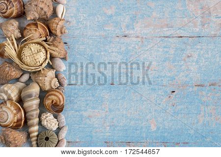 Different marine items on blue wooden background. Sea shells on old wooden planks.