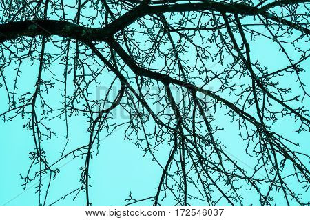 the sky through the branches of a tree