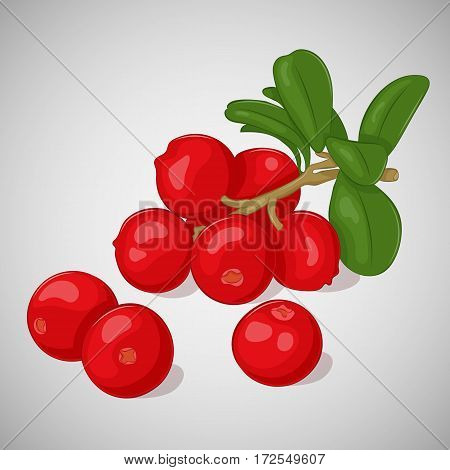 Bright juicy lingonberry on grey background. Sweet delicious for your design in simple cartoon style. Vector illustration. Berries Collection.