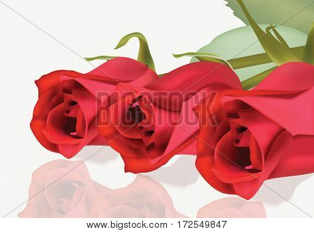 Realistic red roses bouquet Beautiful Flowers Roses Postcard for Happy Valentines Day, Birthday, Anniversary. Isolated on White Background Vector