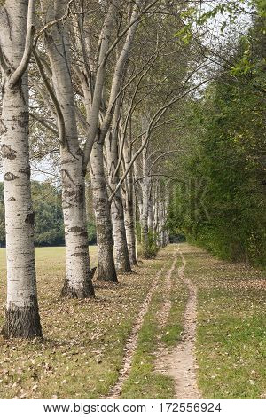 Milan (Lombardy Italy): the park known as Parco Nord at september. A path and a row of trees
