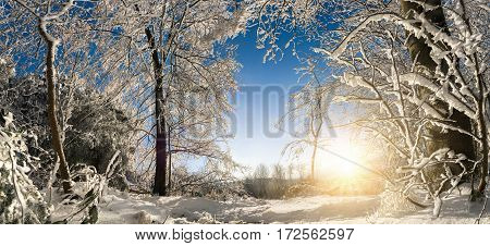 Scenic winter wonderland panorama with the sun snow on trees and clear blue sky