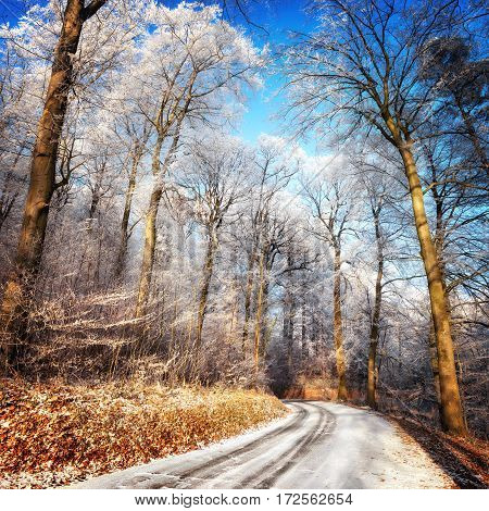 Scenic forest road in winter with snow and hoarfrost on the trees and clear blue sky