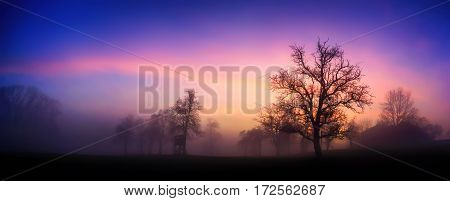 Panoramic rural landscape with dramatic sky at dawn silhouettes of bare trees in fog against pink and purple clouds