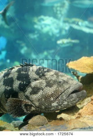 Big Tropical Fish
