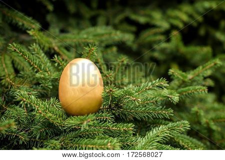 Photo Of Golden Egg On Xmas Pine Tree To Represent Wealth And Luck