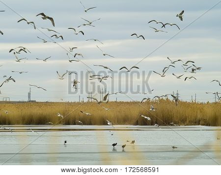 The seagulls and ducks on the frozen lake