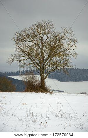 Lonely tree in winter country. Cloudy weather during cold winter days