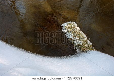 Detail of frozen grass by the river. Snowy riverside and river.