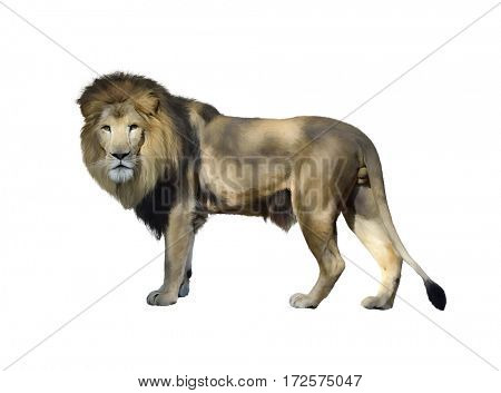 Digital Painting of  Lion isolated on white background