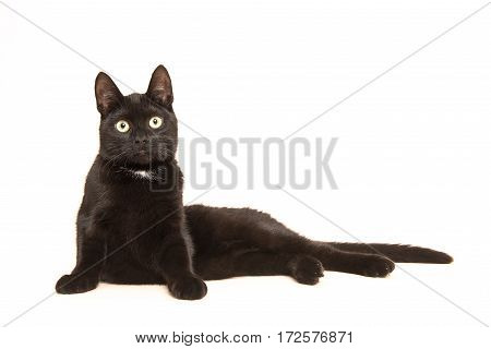 Black adult cat lying in the floor uprising to sit up facing the camera isolated on a white background