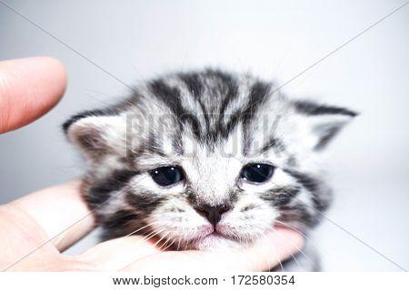 muzzle kitten striped baby portrait baby kitty