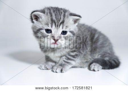 Kitten striped baby. Little kitten, sad eyes
