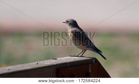 Flycatcher standing alone in a peace environment