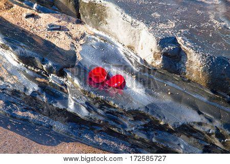 Rose petals on a rock at the atlantic ocean