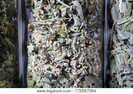Dried lemon balm herb inside a glass jar. Herbs and plants for tea.