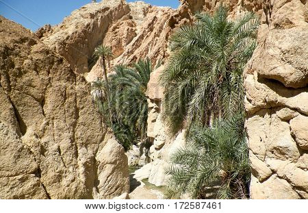 Oasis in the mountains in the desert. Stone desert and the oasis. Tourism and travel.