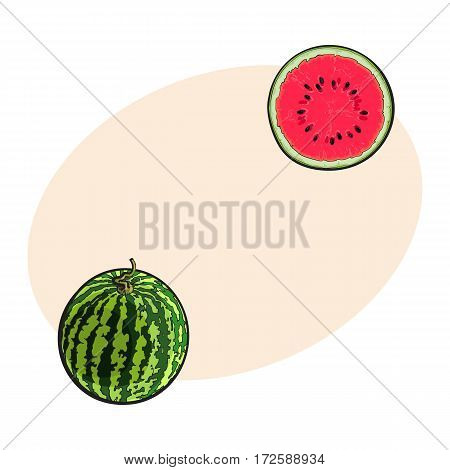 Whole striped watermelon with curled up tail and cut in half, sketch style vector illustration isolated with place for text. Realistic hand drawing of whole and half of juicy, ripe watermelon