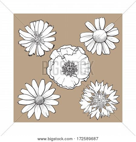 Set of wild, black and white field flowers - poppy, chamomile, cornflower, daisy, sketch vector illustration isolated on brown background. Realistic hand drawing of field flowers, decoration elements