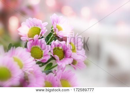 Fresh pink flowers in spring with bokeh
