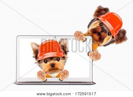 Fixing computer and repair center concept with cute dogs. Template for web page with 404 error, page is lost and not found message, under construction.