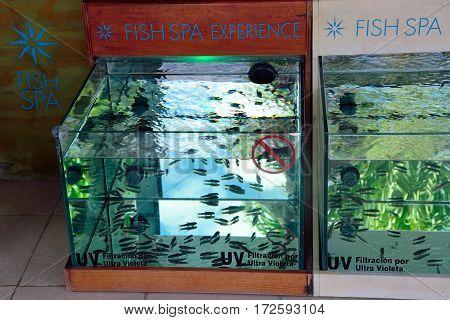 Coba Mexico - January 19 2017: Fish manicure tanks